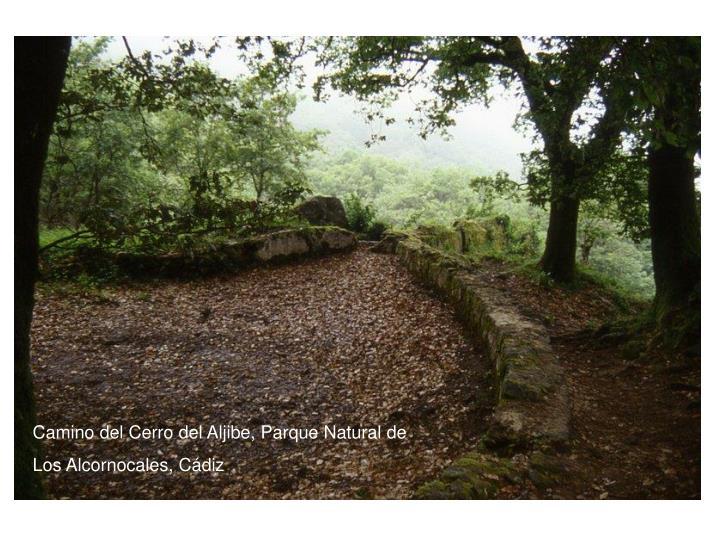 Camino del Cerro del Aljibe, Parque Natural de