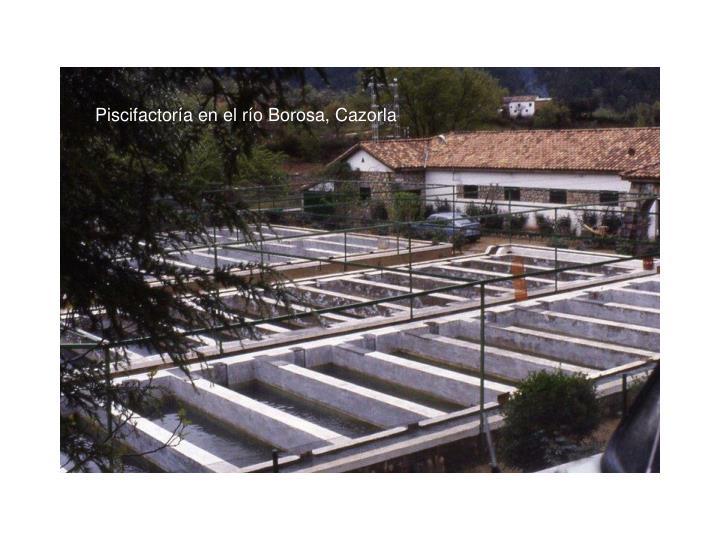 Piscifactoría en el río Borosa, Cazorla