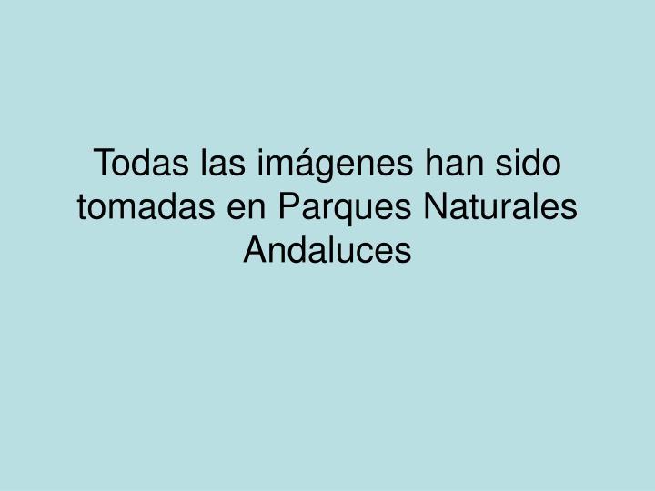Todas las imágenes han sido tomadas en Parques Naturales Andaluces