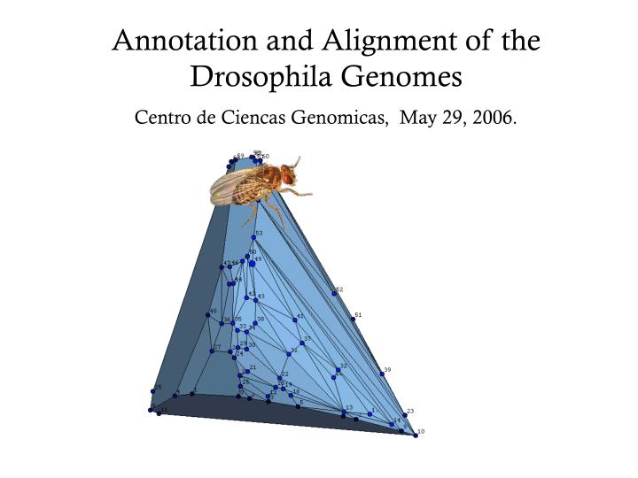 Annotation and Alignment of the Drosophila Genomes
