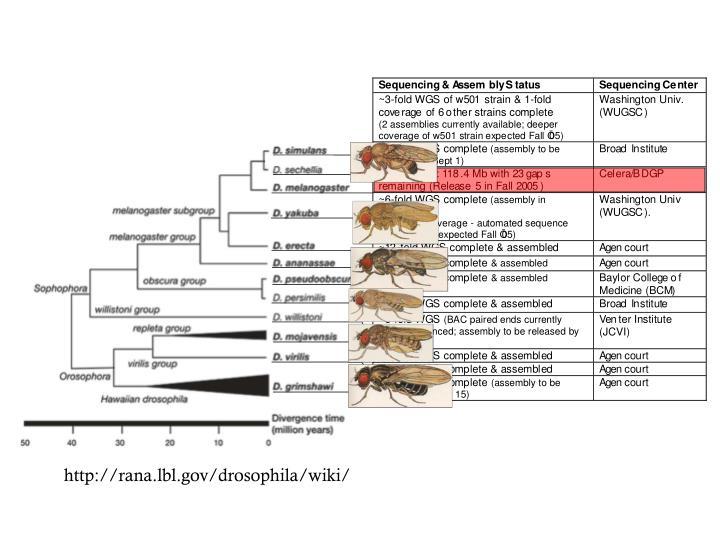 http://rana.lbl.gov/drosophila/wiki/