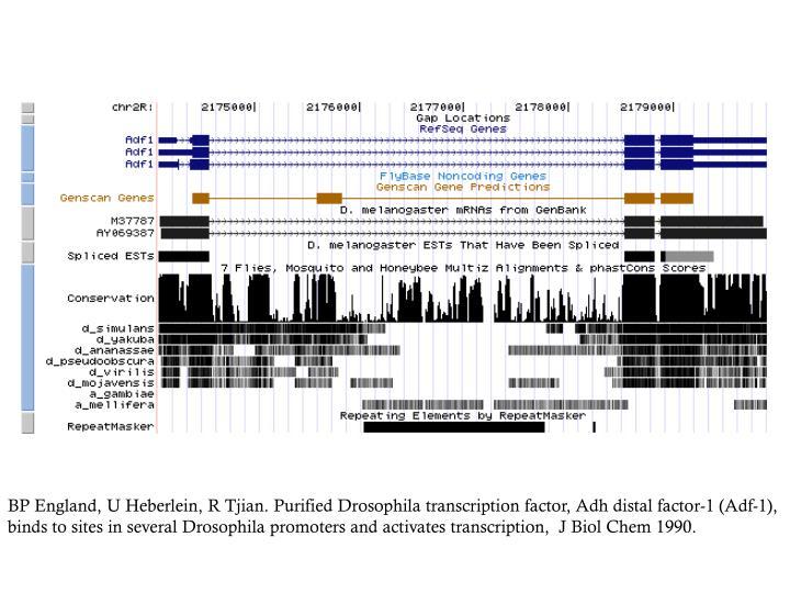BP England, U Heberlein, R Tjian. Purified Drosophila transcription factor, Adh distal factor-1 (Adf-1), binds to sites in several Drosophila promoters and activates transcription,  J Biol Chem 1990.