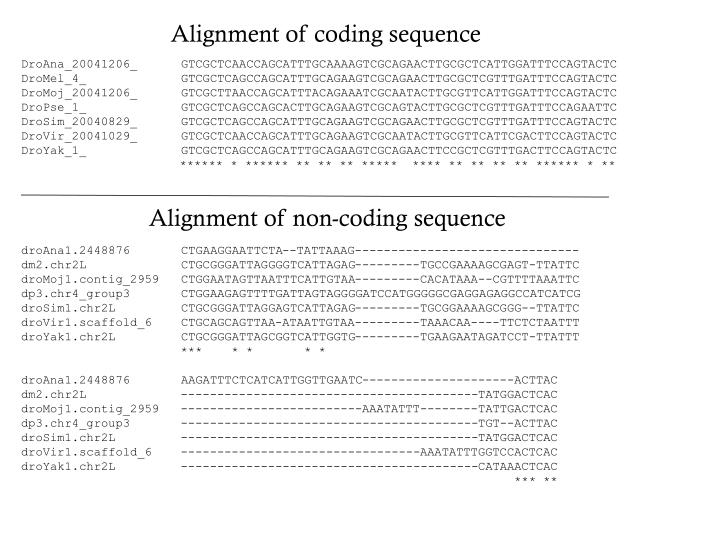 Alignment of coding sequence