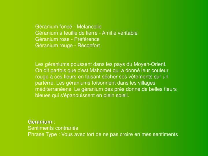 Géranium foncé - Mélancolie