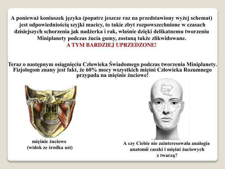 А ponieważ koniuszek języka (popatrz jeszcze raz na przedstawiony wyżej schemat)