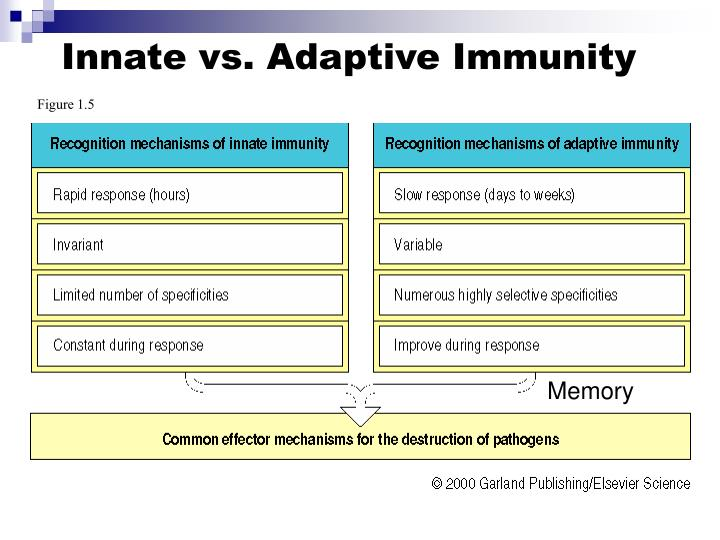 Innate vs. Adaptive Immunity