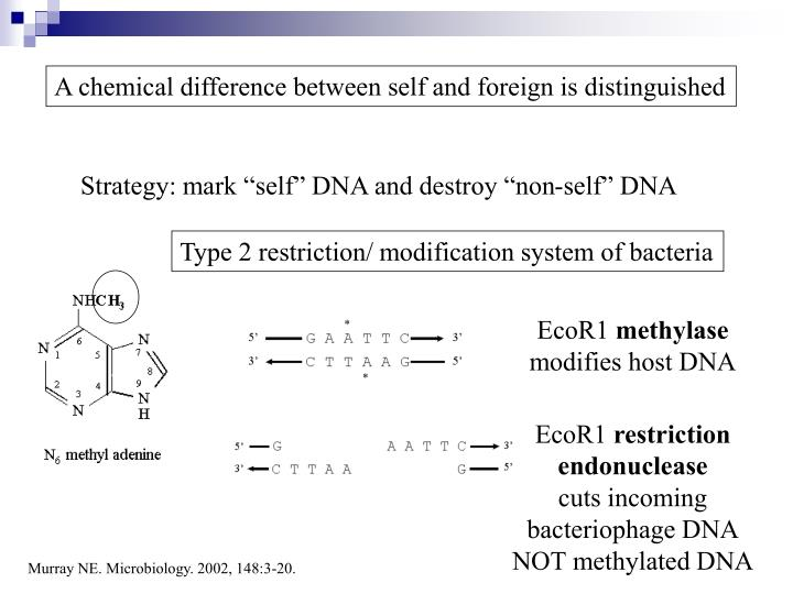 A chemical difference between self and foreign is distinguished