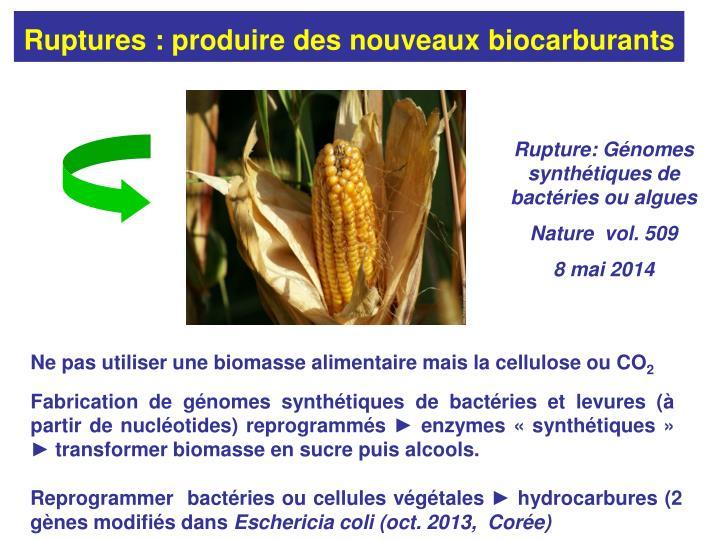 Ruptures : produire des nouveaux biocarburants