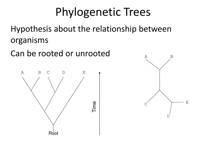 Phylogenetic Trees