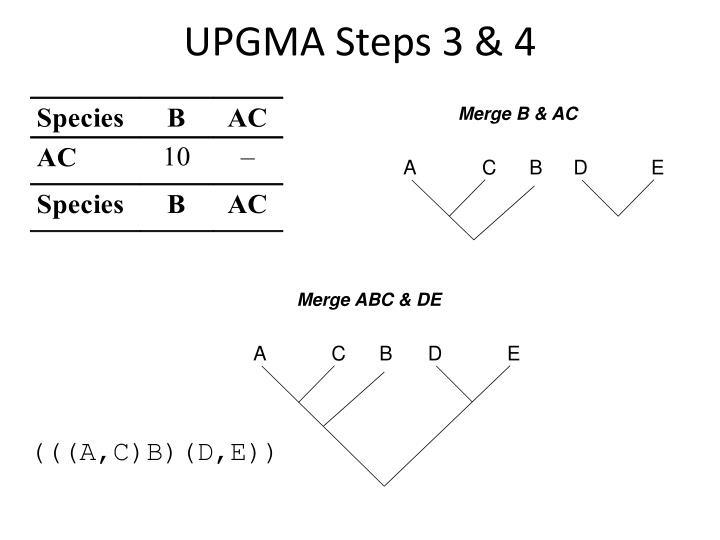 UPGMA Steps 3 & 4