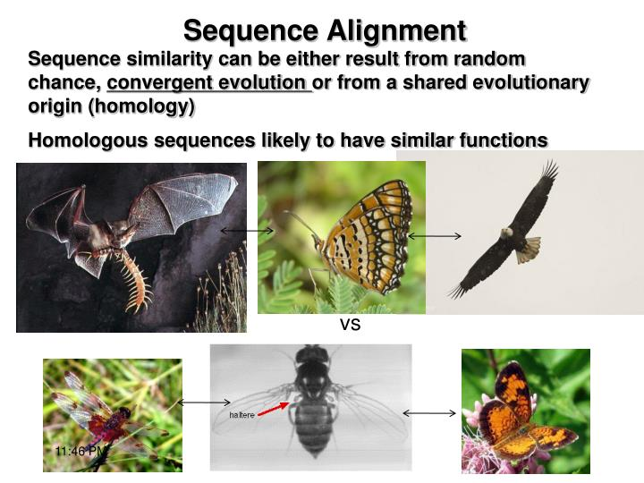 Sequence similarity can be either result from random chance,
