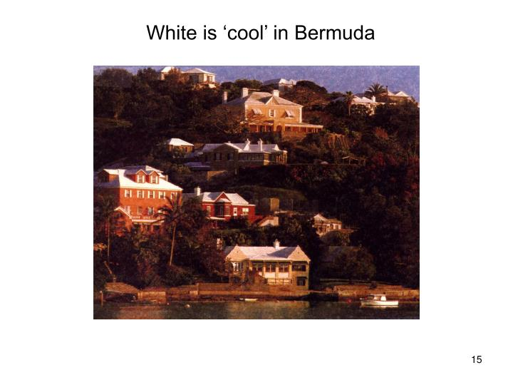 White is 'cool' in Bermuda