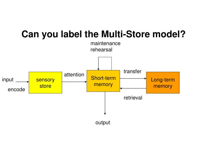 Can you label the Multi-Store model?