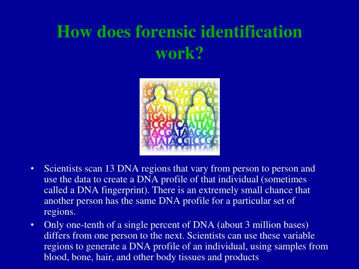 How does forensic identification work