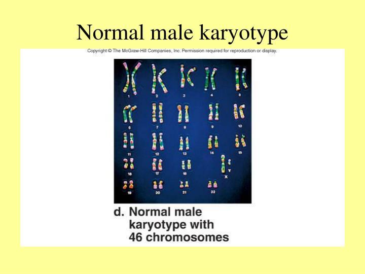 Normal male karyotype