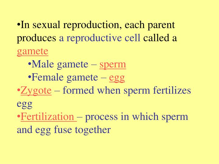 In sexual reproduction, each parent produces
