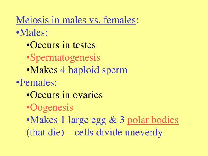 Meiosis in males vs. females