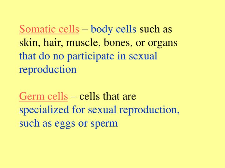 Somatic cells