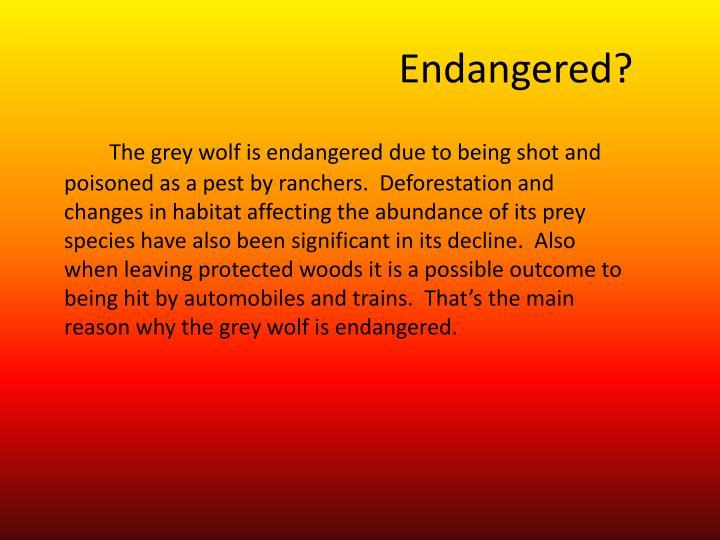 Endangered?