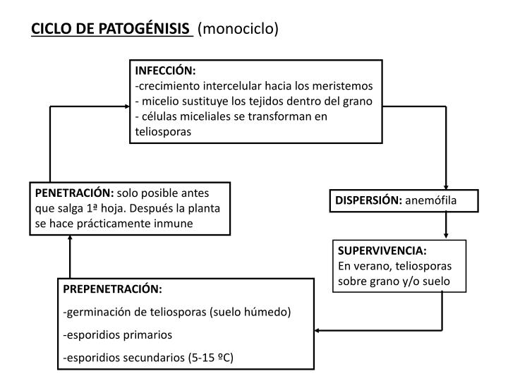 CICLO DE PATOGÉNISIS