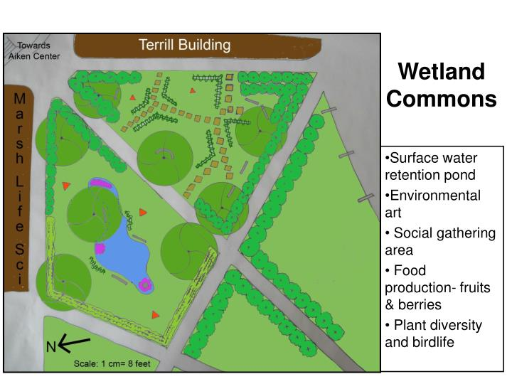 Wetland Commons