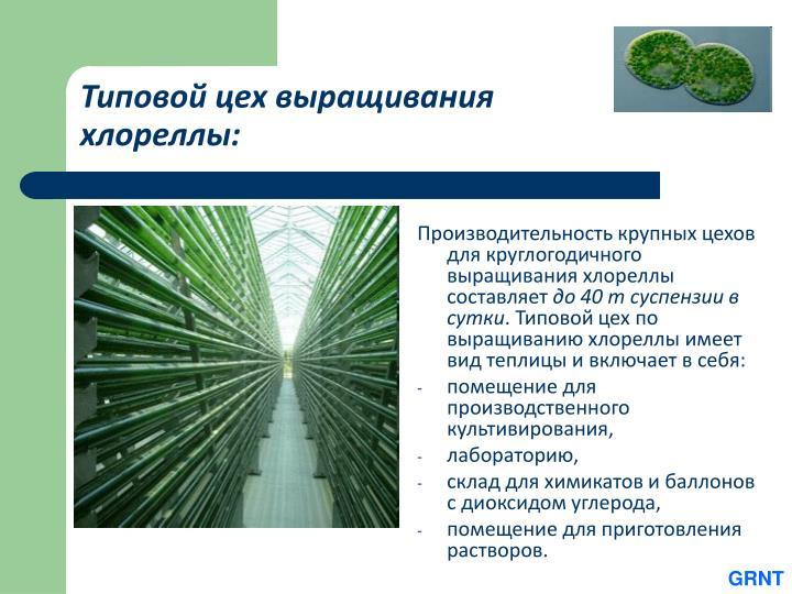 Типовой цех выращивания хлореллы