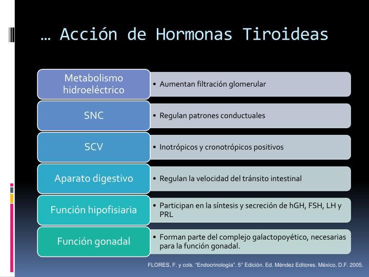 … Acción de Hormonas Tiroideas