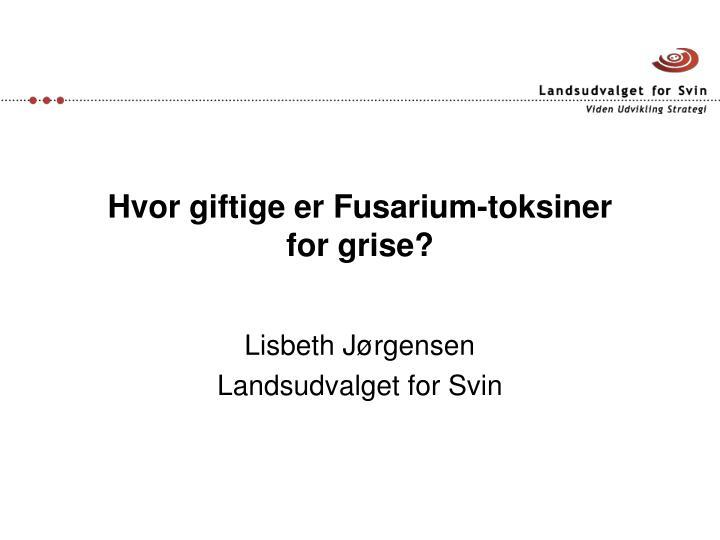 Hvor giftige er Fusarium-toksiner