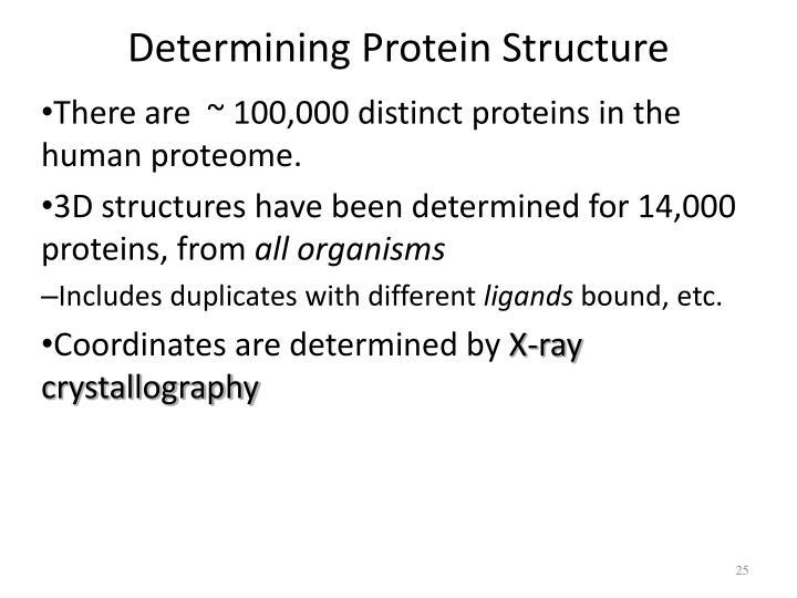 Determining Protein Structure