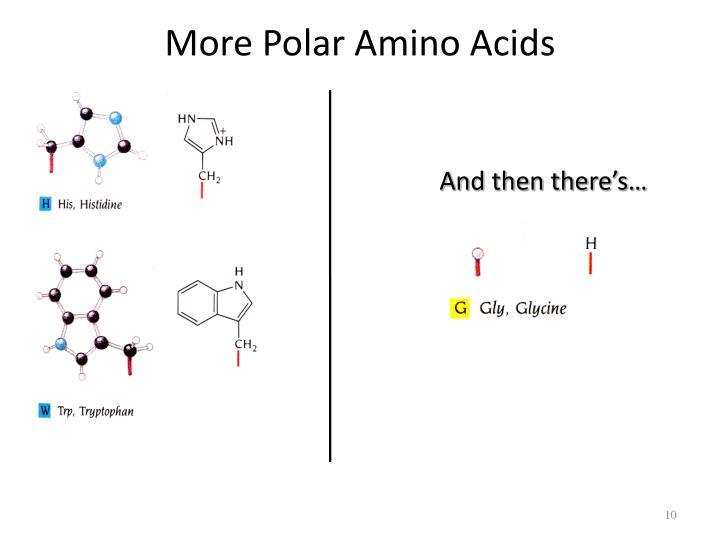 More Polar Amino Acids
