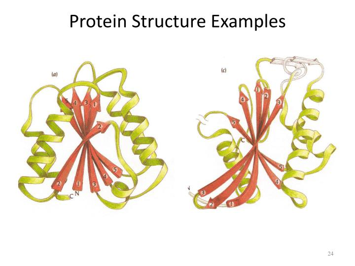 Protein Structure Examples