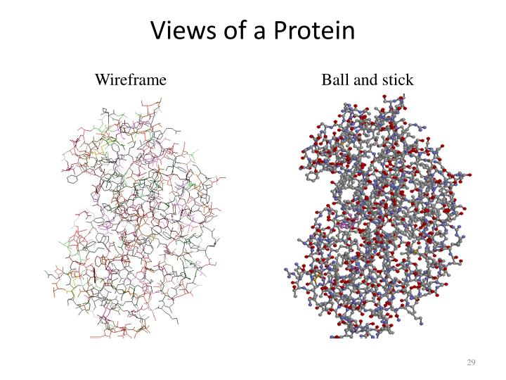 Views of a Protein