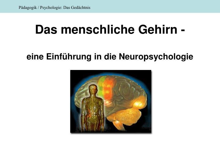 Das menschliche Gehirn -
