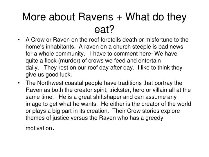 More about Ravens + What do they eat?