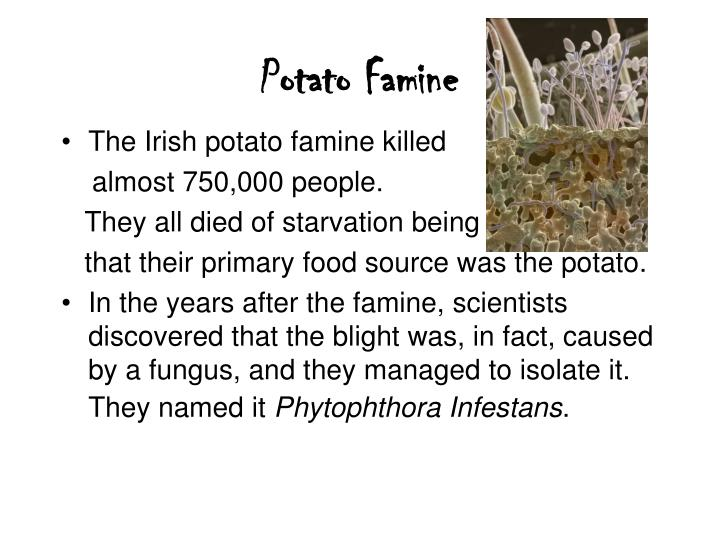 Potato Famine