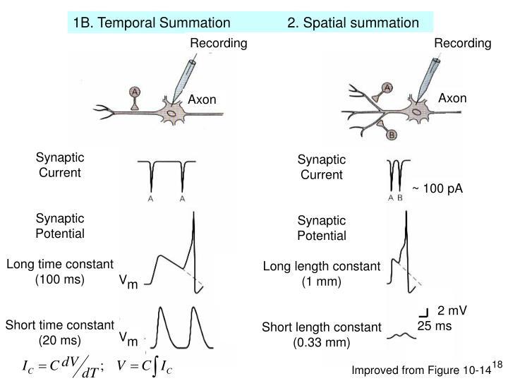 1B. Temporal Summation   2. Spatial summation