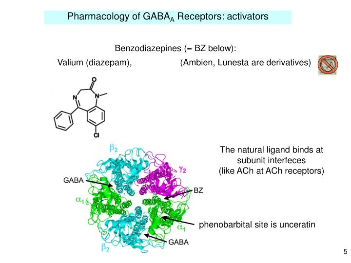 Pharmacology of GABA