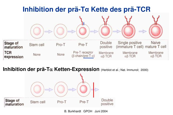 Inhibition der prä-T
