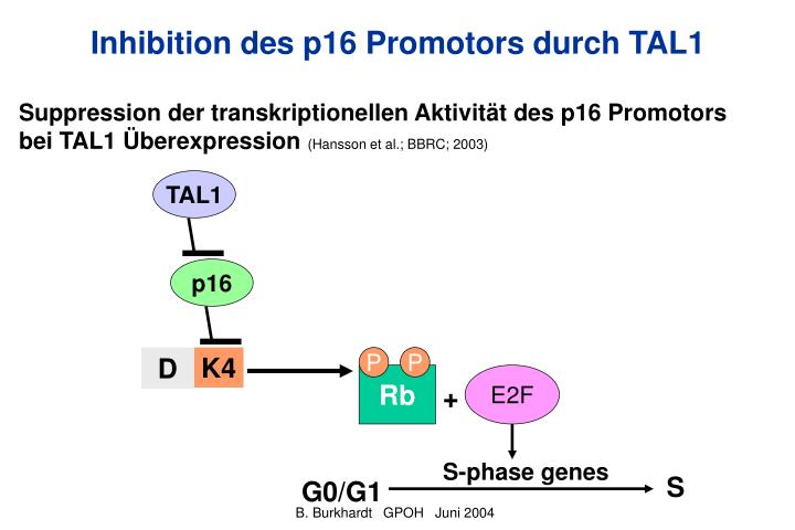 Inhibition des p16 Promotors durch TAL1