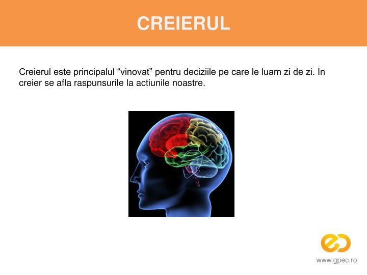 """Creierul este principalul """"vinovat"""" pentru deciziile pe care le luam zi de zi. In creier se afla raspunsurile la actiunile noastre."""