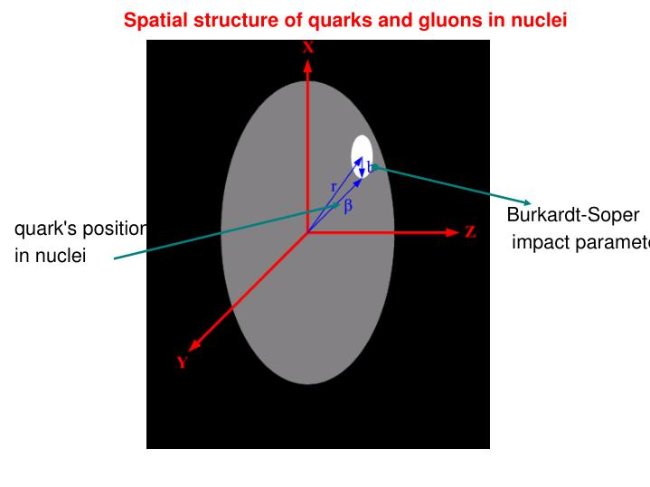 Spatial structure of quarks and gluons in nuclei