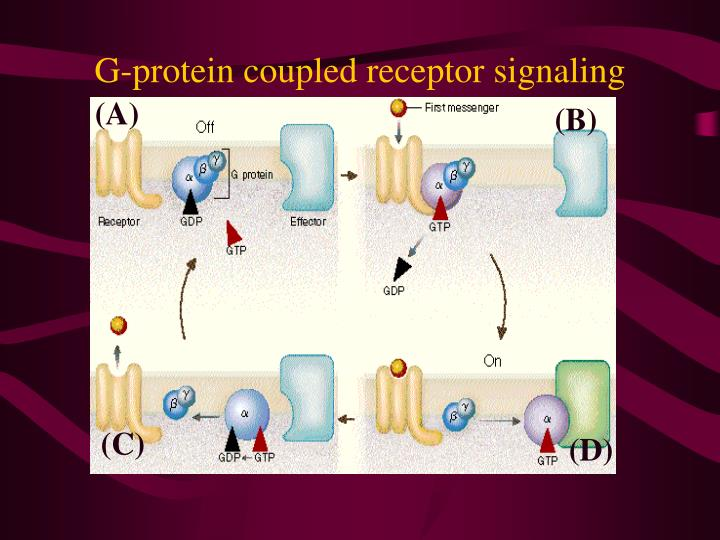 G protein coupled receptor signaling