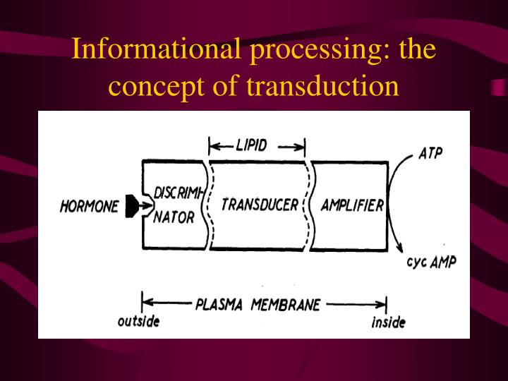 Informational processing: the concept of transduction