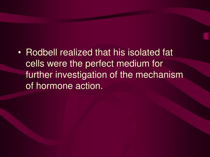 Rodbell realized that his isolated fat cells were the perfect medium for further investigation of the mechanism of hormone action.