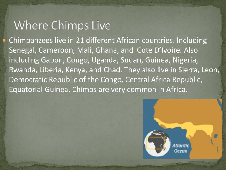Where chimps live