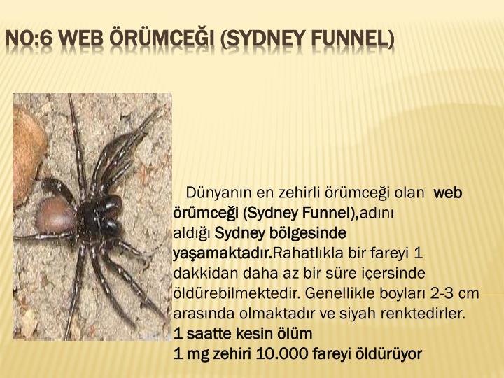 Dünyanın en zehirli örümceği olan