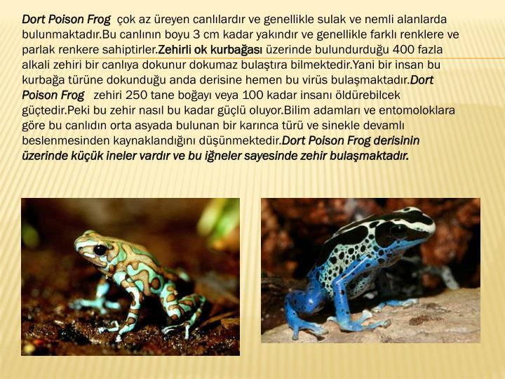 Dort Poison Frog