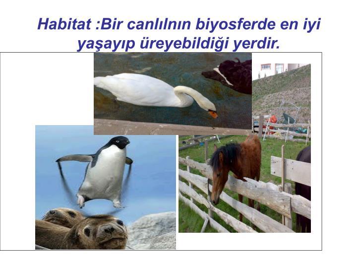 Habitat :Bir canllnn biyosferde en iyi yaayp reyebildii yerdir.