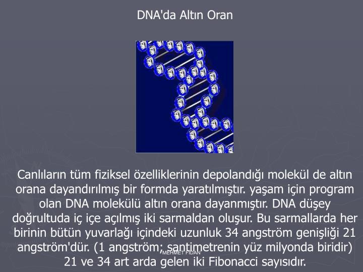 DNA'da Altın Oran