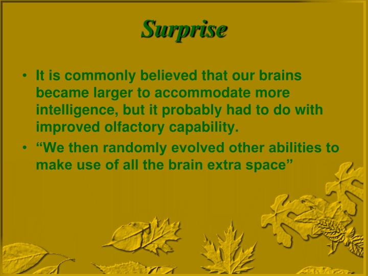 It is commonly believed that our brains became larger to accommodate more intelligence, but it probably had to do with improved olfactory capability.